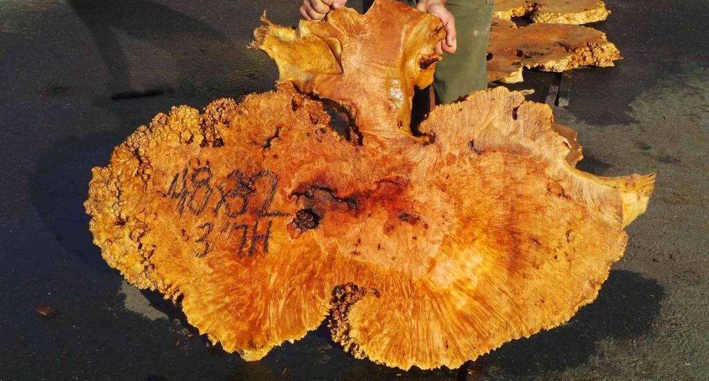 Burl wood redwood burl maple burl walnut burl wood for Maple wood slab