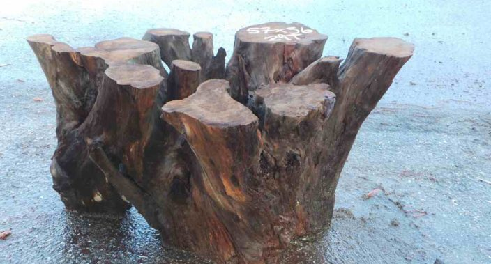 Redwood stump base for dining room table