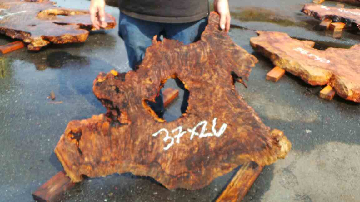 Live edge burl slab with character void