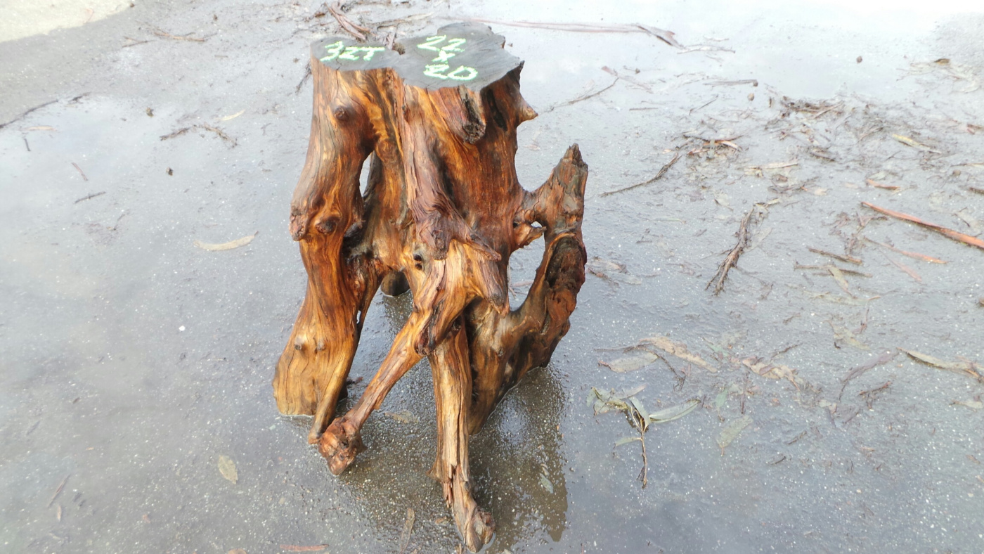 Redwood Root Table Base