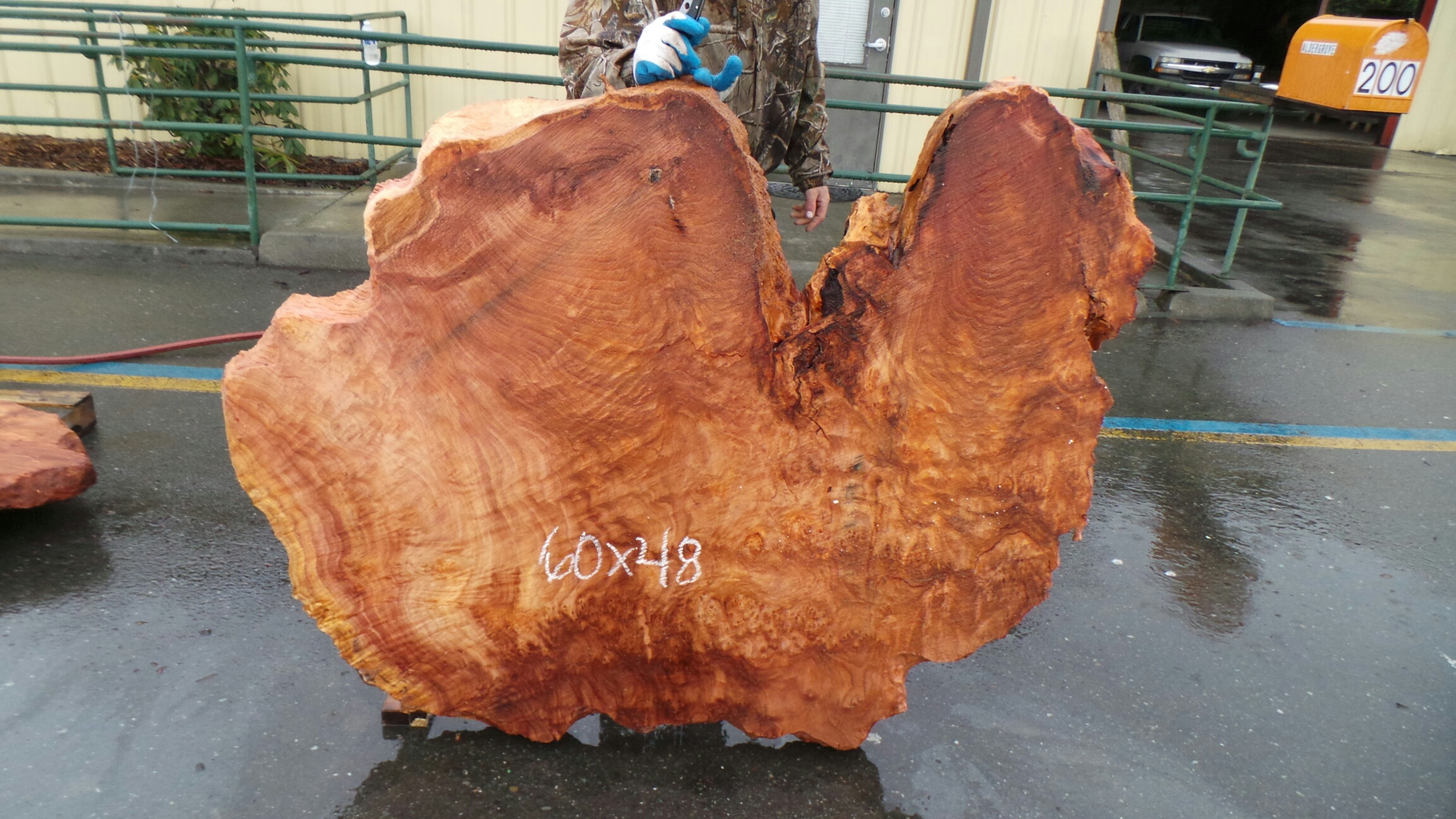 Burl Wood End Table Raw Slice Slab