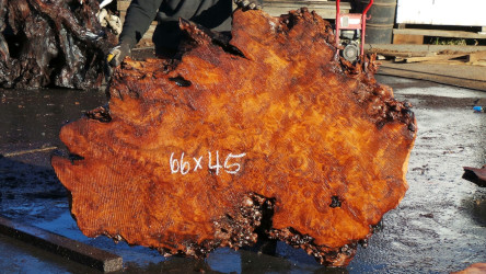 Redwood Burl Slabs
